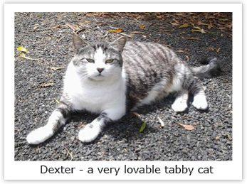 dexter_photo