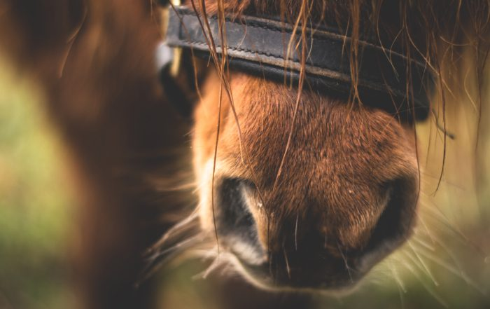 close-up-of-horse-nose-282893
